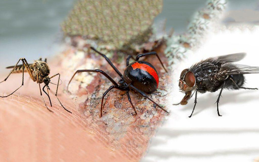 pest control flies